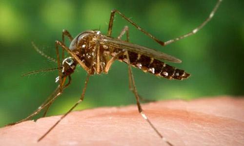 Olufemikusa - preventing malaria from mosquito bite